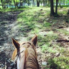 I went horseback riding on my birthday and it was glorious.
